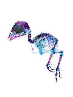 New world Transparent Specimen #skeleton #x-ray #bird #chick #neon