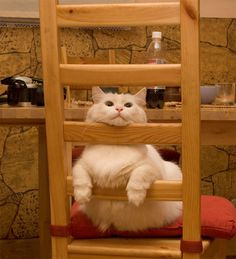 50+ Funny Cat Pictures #funny #pictures #cat