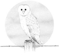 """Barn Owl"" by Chris Cerrato | http://www.cerratosaurus.com/"