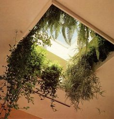 want to live here #window #garden #greenspace