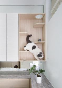 Pets Playground - Residential Interior Design from Sim-Plex Design Studio 7