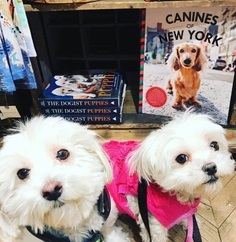 Most Dog Friendly Stores in America - Anthropologie