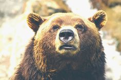 Great photo by Thomas Lefebvre http://tlbvr.com/ #photography #bear