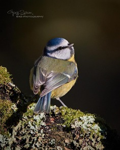 #perfect_birds: Fantastic Birds Photography by Gary Spicer