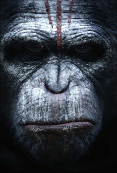 First Posters: #dawn #apes #war #of #tribal #monkey #ape #the #primate #portrait #posters #film #face #animal #planet