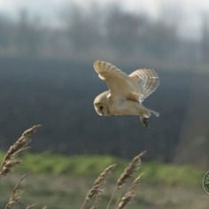 @barnowltrust - Instagram Post - 05/29/2019 11:08 AM - 1 Likes and 0 Comments - InstaTagz.com