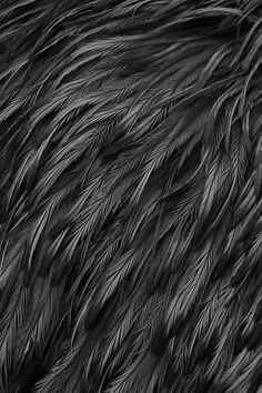 feathers #feathers