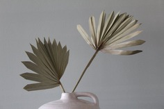 2 x Natural Dried Palm fan / dried stems / Home decor / image 0