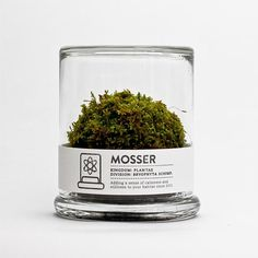 scientific glass moss terrarium #packaging #botanical #terrarium #label