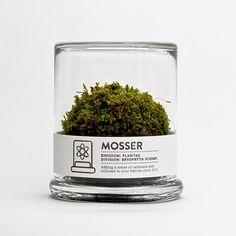 scientific glass moss terrarium