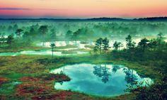 Forest Landscape Artistic Wallpaper High Resolution Free Download – WallpapersBae