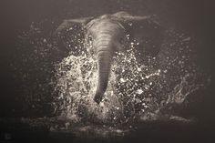africa-souls-zoo-photography-manuela-kulpa-4 #photography #animals