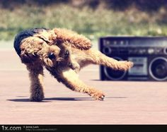 72dpi #breakdancing #dog