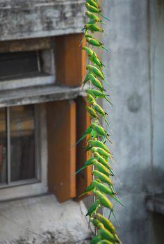 parrot, bird, birds, green, wire