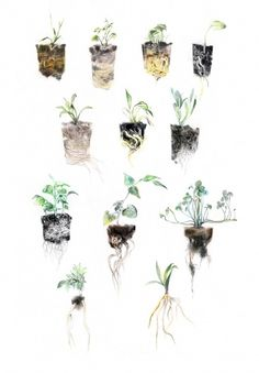 Creative&Live - Junyi Wu #illustration #plants