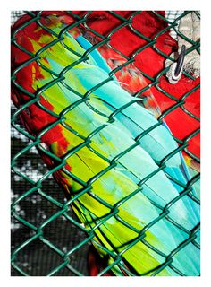 Every reform movement has a lunatic fringe #fabric #link #color #chain #photography #parrot