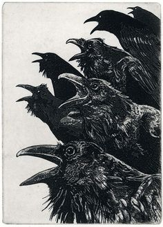 The Ravens #illustration #black and white #murder #birds #crows #ravens