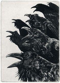 The Ravens #illustration #black and white #murder #birds #crows #ravens
