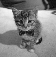 FFFFOUND! | Tumblr #cute #kawaii #gatito #kitty