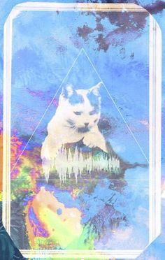 chrissie shop — ACID CAT #abbott #chrissie #flashback #acid #cat