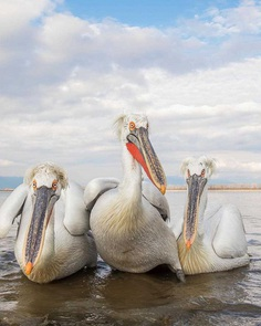 Sunil Gopalan Captures Striking Photos of Birds on Five Continents