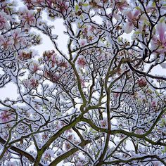 this isn't happiness™ Peteski #tree #snow #nature #spring #winter