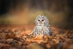 #owlsofinstagram: Adorable Owl Pictures by Tanja Brandt