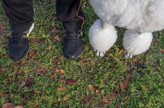 Feet & Paws by Alex Beker #inspiration #photography