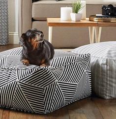 Most Dog Friendly Stores in America - Jo-Ann Fabrics