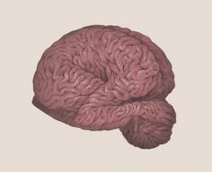 No Body, No Mind - by Ashley Mackenzie #mind #conceptual #brain #body #anatomy #illustration #fetal #organ
