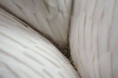 kate mccgwire: braided feather sculptures #feather