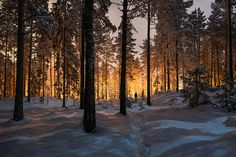 Between two worlds #flickr #worlds #snow #two #colossal #finds #photography #glow #mikko #lagerstedt #between #trees