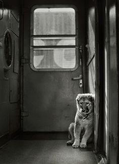 Tumblr #puppy #photography