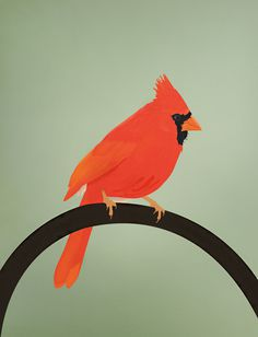 DesignersMX: The Cardinal by James Oconnell #wild #canada #bright #cardinal #oconnell #bird #james #illustration #colour #fly #scene #anonymousmag #animal