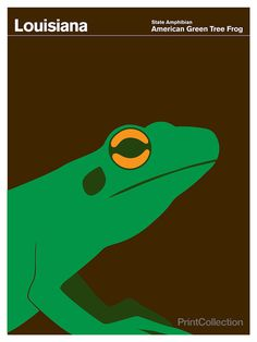 Louisiana #amphibian #brown #frog #green