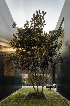 Lluvia House in Mexico City / Pérez Palacios Arquitectos Asociados