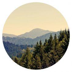 juli11_07.jpg (JPEG-Grafik, 850x850 Pixel) #jochen #round #black #vintage #forest #pach