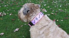 Design Your Own Dog Collar #tech #flow #gadget #gift #ideas #cool