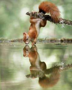 Amazing Wildlife Photos of European Squirrels by Julian Rad