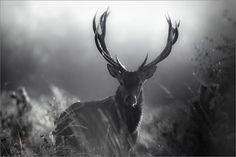 Eight Hour Day » Blog #wood #deer #photo