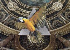 Perropera – #print #design #graphic #bird #illustration #photography #art #poster #animal