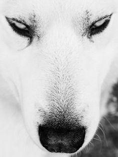 tokyo-bleep #wolf