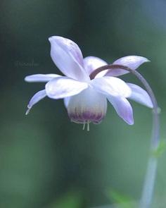 Beautiful Flowers Photography by Miyagawa Sirashu