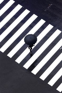 #crossing #zebra