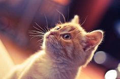Cat #creative #photo #cat #best #photography #ginger