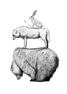amydover.com hare wolf bear #lines #hare #the #illustration #wolf #bear