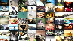 Beautiful designed photo mosaic for http://www.polarfox.com! #inspiration #photos #background #dog #photo #website #mosaic #startup #beach #new