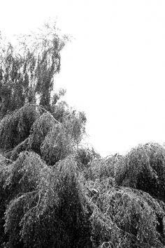 Toutes les tailles | Arbre | Flickr: partage de photos! #tree