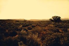desertshrubsweb #photography #tim navis #navis photography #outdoor