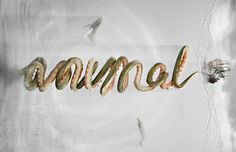 MatCloud #logotype #collaboration #illustration #species #type #animal #typography